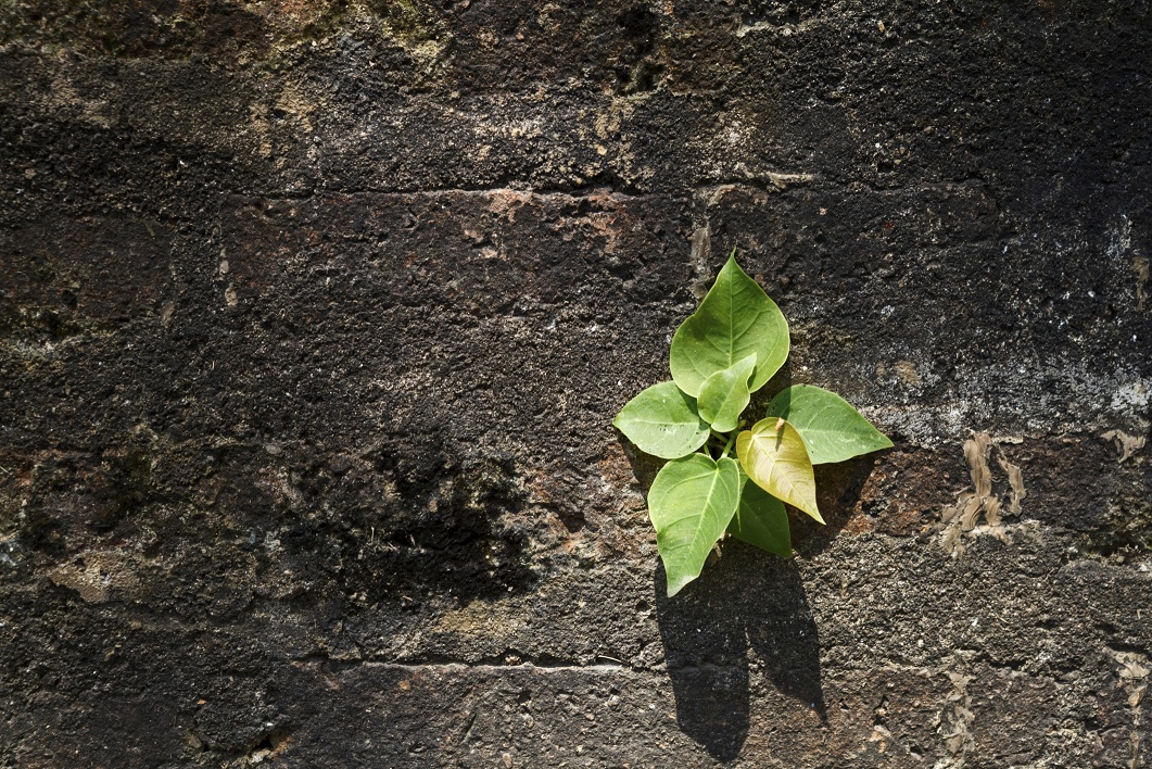 Seedling on wall background